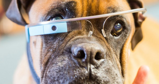 google_glass_dog-660x350