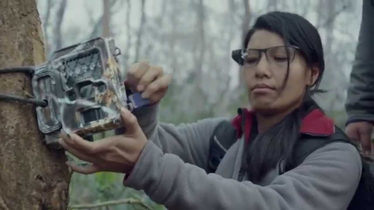 Protegiendo tigres y rinocerontes con las gafas de Google